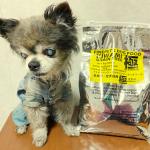 【評判は?】ファインペッツ極ドッグフードを愛犬に与えてみた私の口コミ!