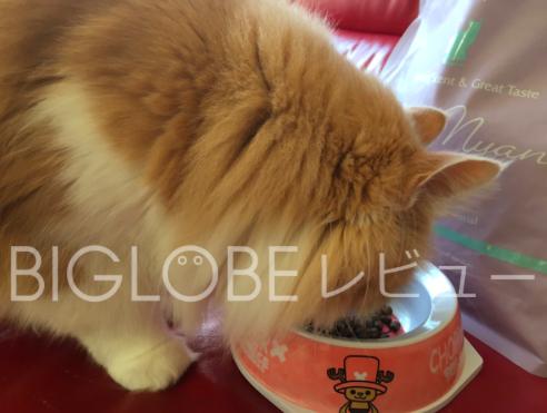 愛猫がモグニャンを食べている様子