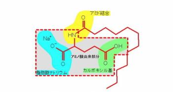 ココイルグルタミン2Naの塩基配列